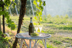 Wine bottle and glass of wine in vineyards. Two glasses of wine with grapes in vinyard Royalty Free Stock Photography