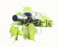 Wine bottle and grapes. Wine bottle and young grape vine branch isolated on white Royalty Free Stock Photos