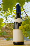 Wine bottle and grapes. Royalty Free Stock Image