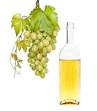 Wine bottle and grapevine Stock Photo