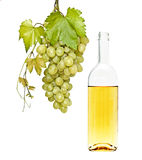 Wine bottle and grapevine Royalty Free Stock Images
