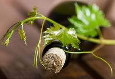 Wine bottle and green grape vine Stock Photo