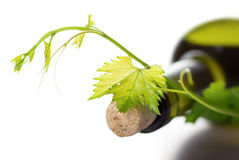 Wine bottle and green grape vine. Close up view of  wine bottle and grape vine  on white background Stock Photos