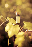 Wine bottle and vine Royalty Free Stock Images