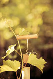 Wine bottle and vine Stock Photography