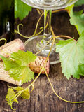 Wine bottle with vine and wine cork . Royalty Free Stock Photo