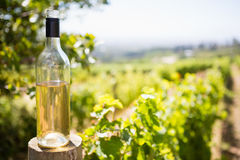 Wine bottle in vineyard Royalty Free Stock Photos