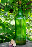 Wine bottle and young grapes on nature background Stock Image