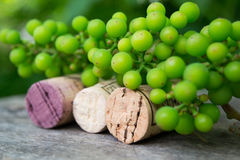 Wine bottle and young grapes on nature background Royalty Free Stock Photo