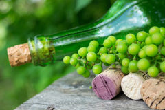 Wine bottle and young grapes on nature background Royalty Free Stock Photography