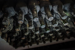 wine bottles in a cobweb in the cellar Stock Photography