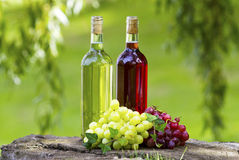 Wine bottles!. Bottles of wine and grapes in the sun Royalty Free Stock Image