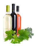 Wine bottles and the grapevine Stock Photos