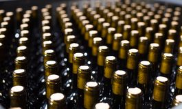 Wine bottles with stoppers on modern winery royalty free stock photo