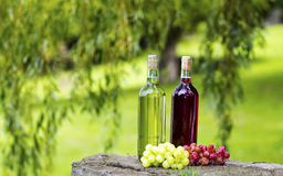 Wine Bottles. Two bottles of wine and some grapes stock images