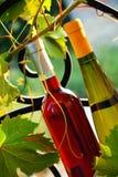 Wine bottles between vine leaves stock photo