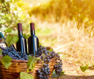 Wine bottles in vineyard Royalty Free Stock Photos