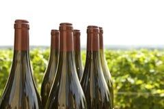 Wine bottles, vineyard Bourgogne. stock image