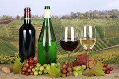 Wine in bottles in the vineyards stock images