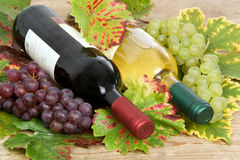 Wine bottles with wine leaves Stock Images