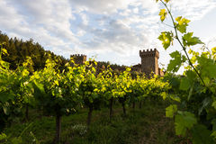 Wine castle in Napa Valley Stock Photography