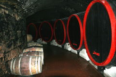 In a wine-cellar. Royalty Free Stock Photography