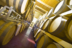 Wine cellar. View of an interior of a wine cellar with racks of barrels Stock Photography