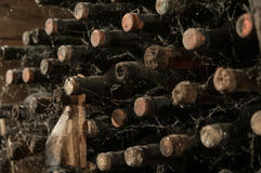 A wine cellar with bottles royalty free stock photos