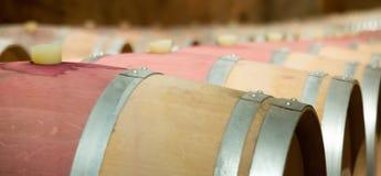 Wine cellar Stock Photography