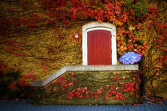 Wine Cellar Vine Covered Door Stock Image