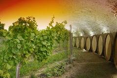 Wine cellar and winery. Old wine cellar with barrels and path blended with landscape of sunset over vineyard Stock Photo