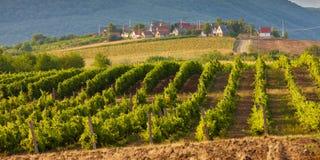 Wine Cellars In Bukkzserc, Hungary Royalty Free Stock Image