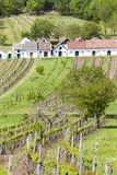 Wine cellars with vineyards, Galgenberg, Lower Austria, Austria. Outdoors, outside, exteriors, europe, central, country, countryside, rural, folk, architecture stock image