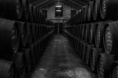 Wine celler with old barrels stock image
