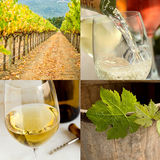 Wine collage. Square image collage for the wine industry stock photo