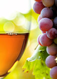 Wine collection: Closeup of rose wine glass and grapes in vineyard Stock Photos