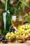 Wine composition. Wine glass with bottle for wine tasting Stock Images