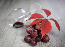 Wine composition: bunch of red grapes, wineglass and autumn leav Royalty Free Stock Image