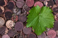 Wine corks with a grape leaf. View from above. Old wine corks with a green grape leaf lying on them. View from above Stock Image