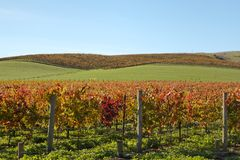Wine counrty Sonoma Royalty Free Stock Photography