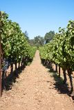 Wine Country. Nappa Valley in California, USA Royalty Free Stock Photo