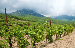 Wine country Royalty Free Stock Photo