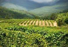 Wine country royalty free stock images