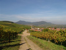 Wine Country. An early autumn day in the Palatinate wine country area of Germany Stock Image