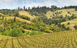 Wine Country, Horizontal Stock Photo