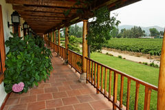 Wine Country House Chile. A porch of a country house with a blooming pink flower and the vineyards in Colchagua Valley, Chile Stock Image