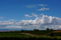 Wine Country landscape with clouds in blue sky. White clouds fill blue sky above vineyards in Yakima Washington USA Royalty Free Stock Photos