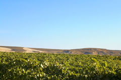 Wine country landscape Royalty Free Stock Photography