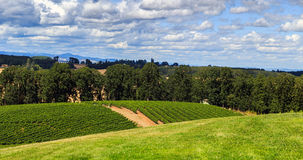 Wine Country. Rows and rows of vineyards are planted on beautiful hillside in Oregon's Willamette valley making world class pinots Stock Image