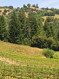 Wine Country, Vertical Royalty Free Stock Image